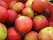 Реализация яблок разных сортов
