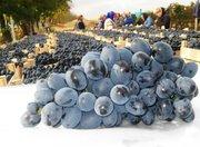 Качественный виноград,  ялоки из Молдовы