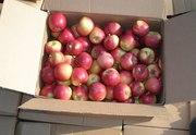 Яблоко - 0, 21 евро / кг
