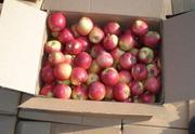 Яблоко - 0, 210 евро / кг