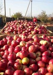 Экспорт овощей и фруктов из Молдавии