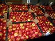 Яблоки оптом от производителя РБ
