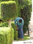Садовники,  биологи,  агрономы,  озеленители требуются в семьи ростовчан