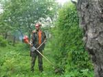 Садовники профессиональные требуются