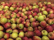 Яблоки оптом со склада